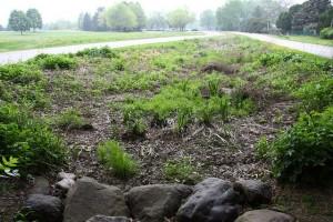 Odana Rain Garden