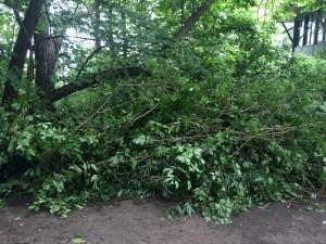 Wingra Springs cleanup pile
