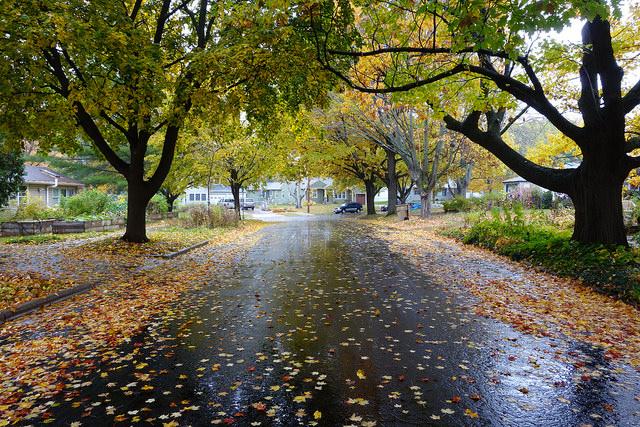 Leaves in Street