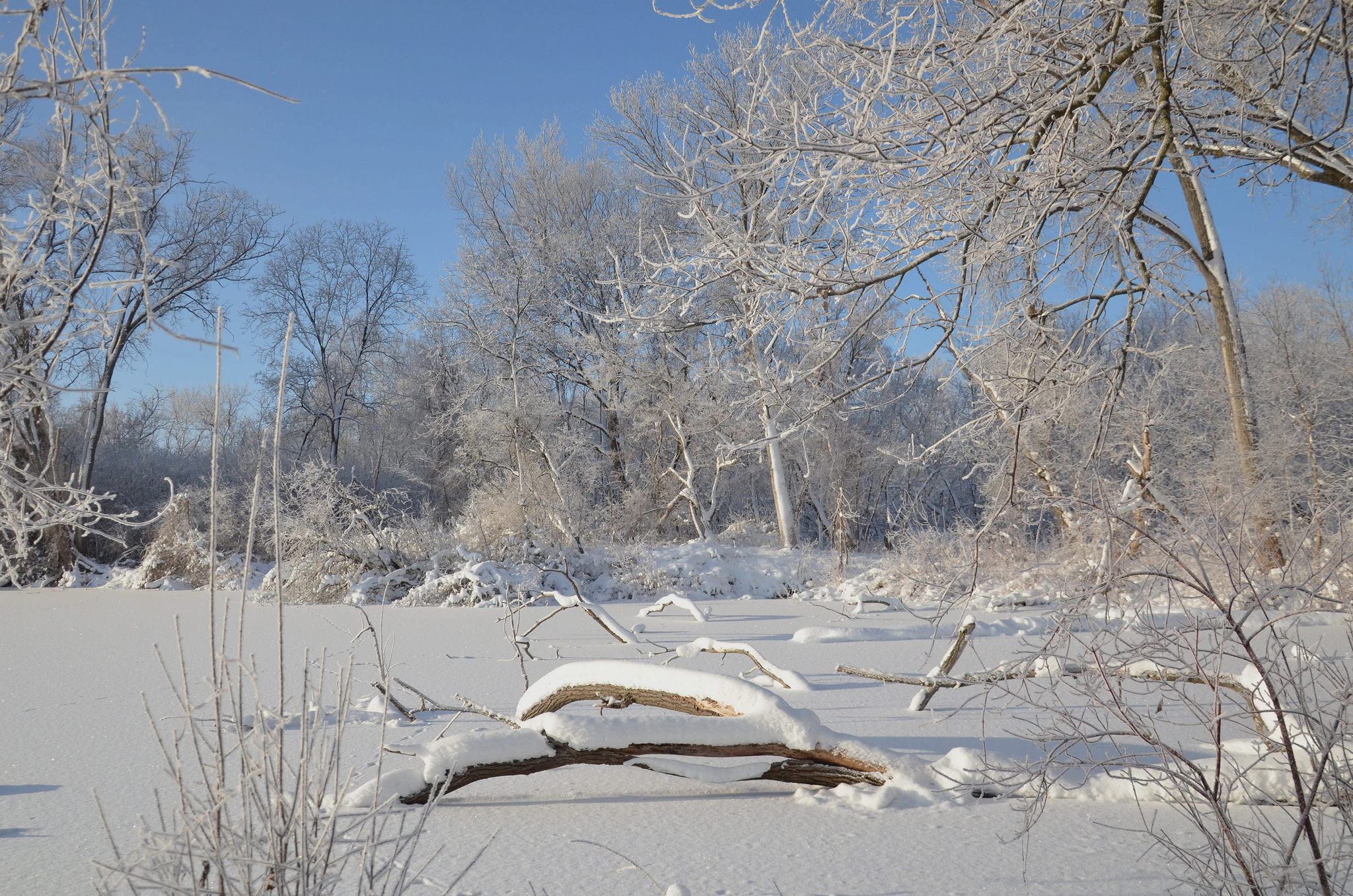 Getting Ready For Winter At Wingra >> Life Under The Ice Friends Of Lake Wingra